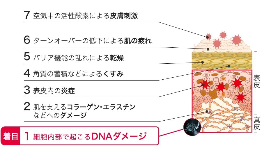 美肌を阻む7つの段階の肌ダメージ